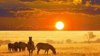 Güney Afrika Vahşi Yaşam Canli İzle