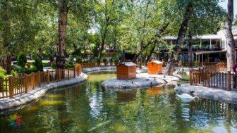 Ankara Kuğulu Park canli mobese izle